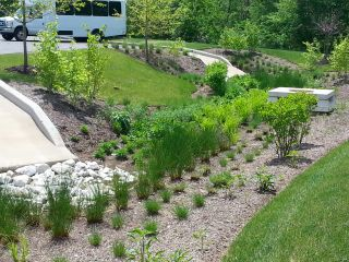 nice looking bio retention landscaping