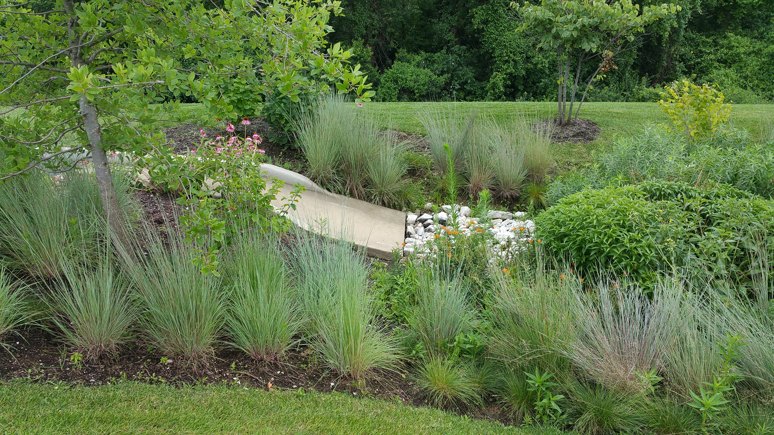 Plants and the design of bioretention areas bluegrass for Design of stormwater ponds