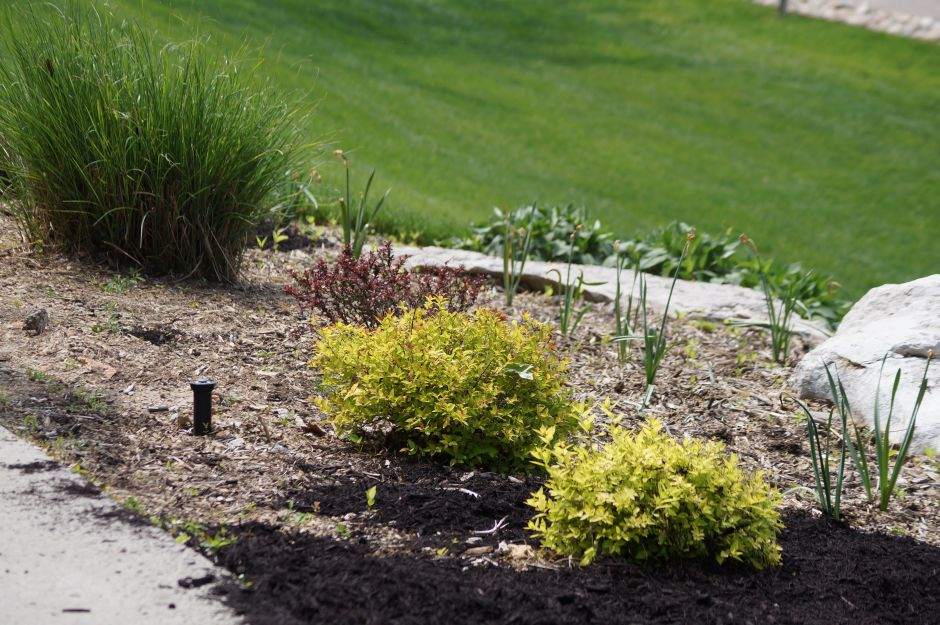 Water Management - Mulch