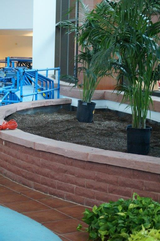 Indoor Planting