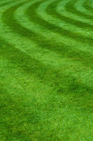 Lawn-Care-resized