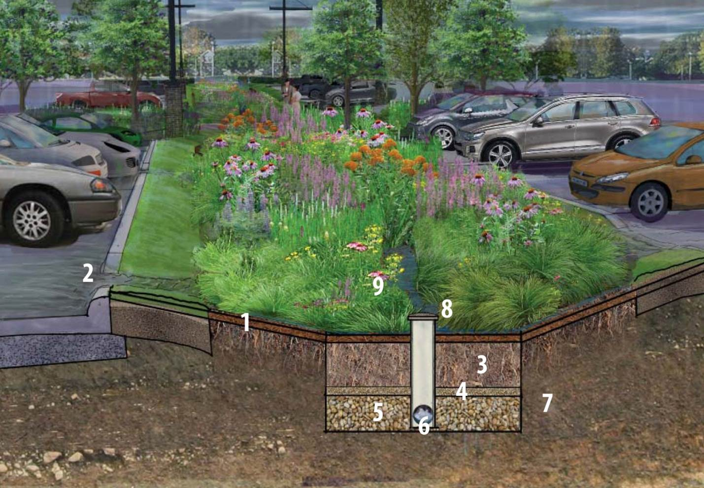 The Importance Of Bioretention Systems Bluegrass Lawncare