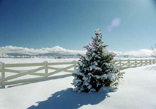 Winterscape Evergreen Tree