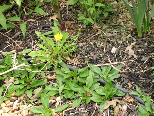prevent bed weeds with pre-emergent herbicides