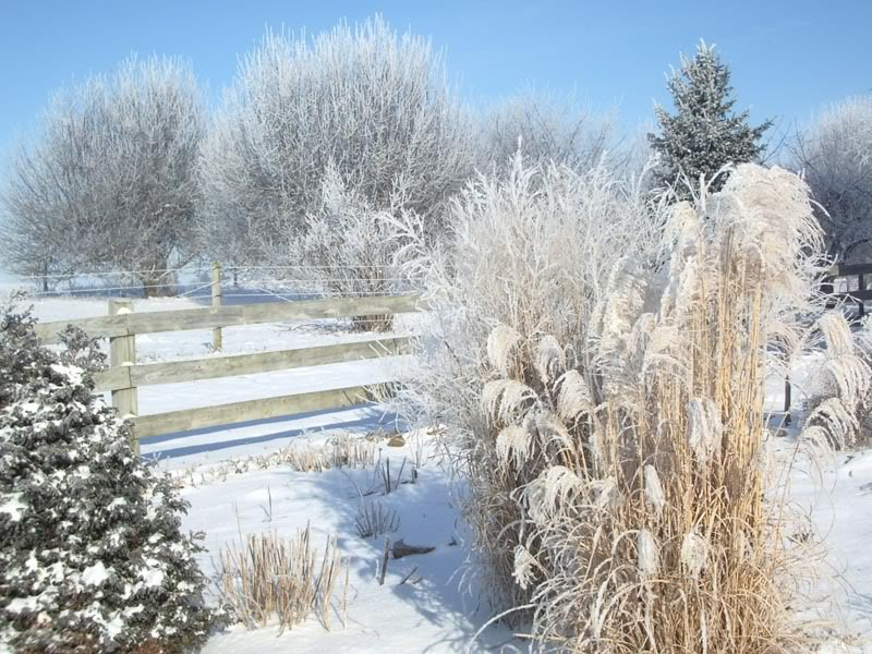 Ornamental Grass, Perennials in the Winter