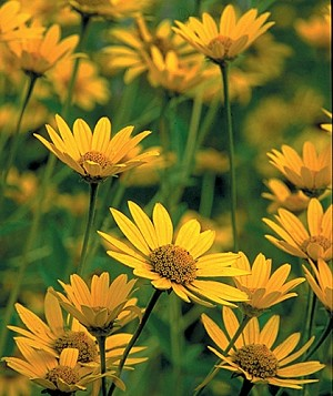 Landscape Water Conservation - native flowers