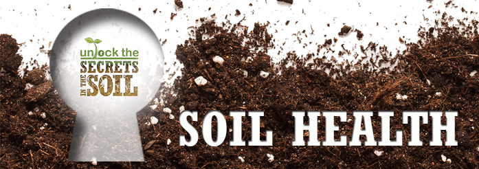 Everything starts with soil bluegrass lawncare for Everything about soil