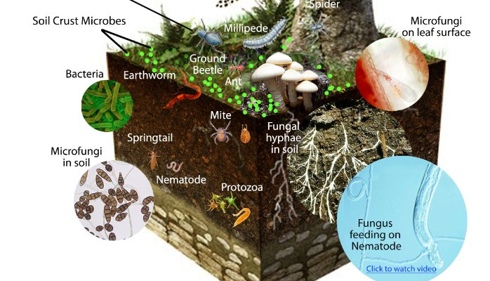 soil microorganisms