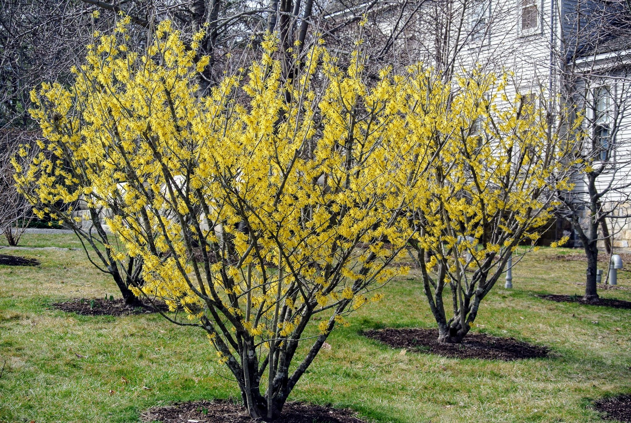 Adding Color To Your Winterscape Bluegrass Lawncare